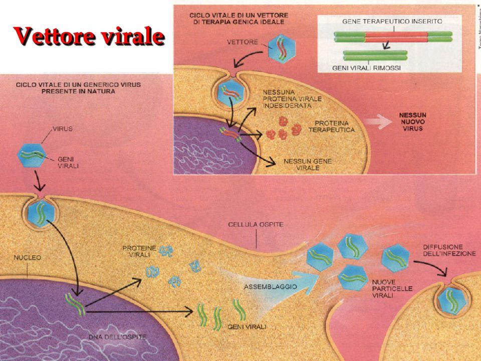 Vettore virale