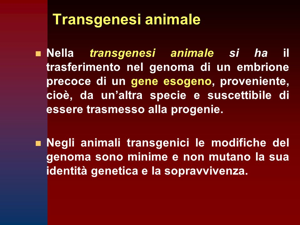 Transgenesi animale