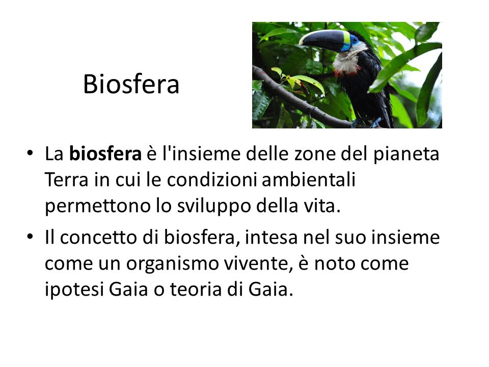 Biosfera La biosfera è l insieme delle zone del pianeta Terra in cui le condizioni ambientali permettono lo sviluppo della vita.
