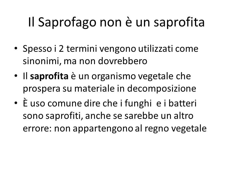 Il Saprofago non è un saprofita