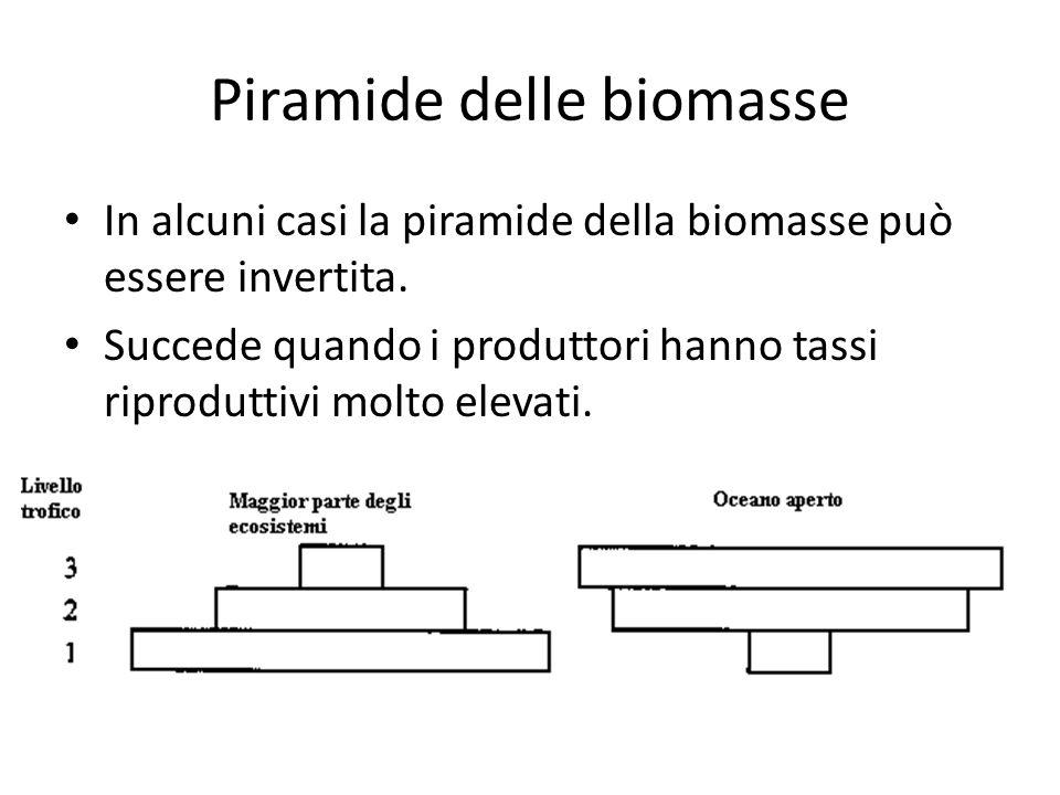 Piramide delle biomasse