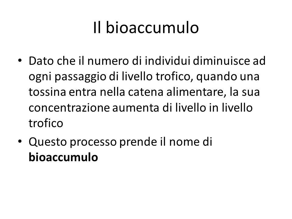 Il bioaccumulo