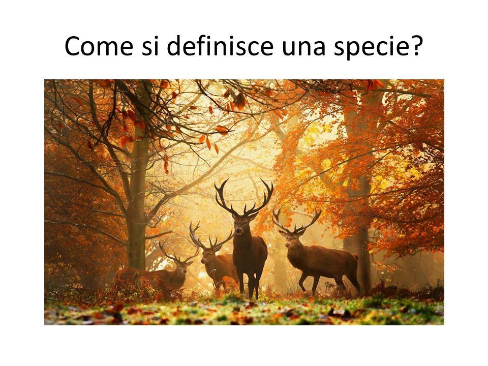 Come si definisce una specie