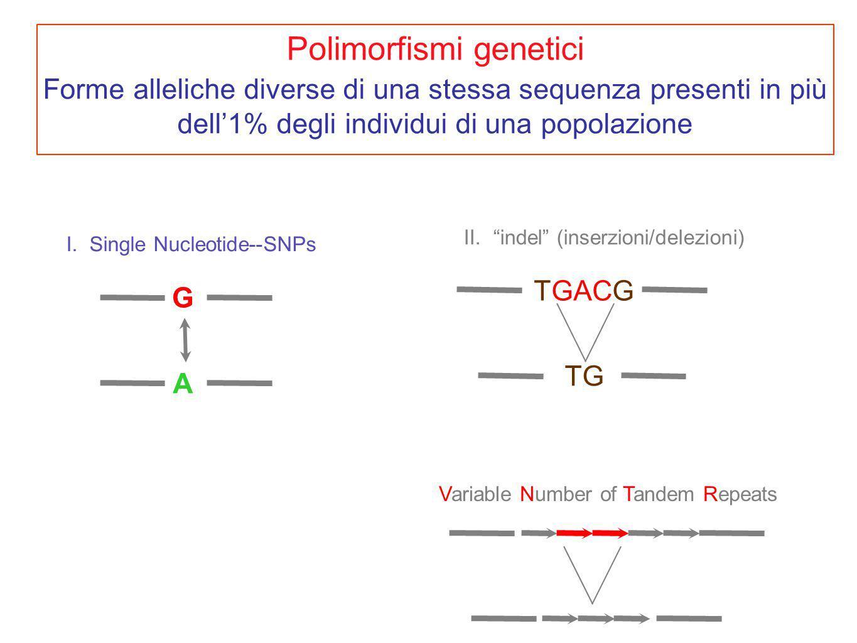Polimorfismi genetici