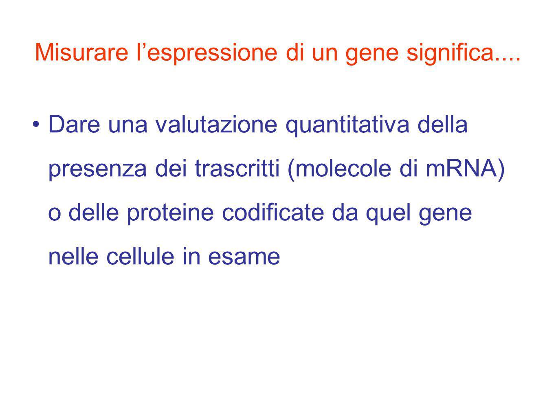 Misurare l'espressione di un gene significa....