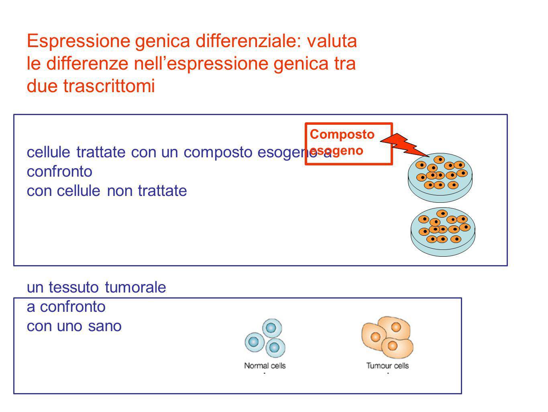 Espressione genica differenziale: valuta le differenze nell'espressione genica tra due trascrittomi cellule trattate con un composto esogeno a confronto con cellule non trattate un tessuto tumorale a confronto con uno sano