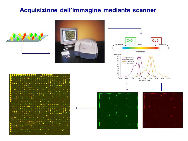 Acquisizione dell'immagine mediante scanner