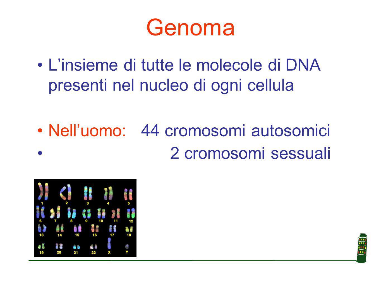 Genoma L'insieme di tutte le molecole di DNA presenti nel nucleo di ogni cellula. Nell'uomo: 44 cromosomi autosomici.