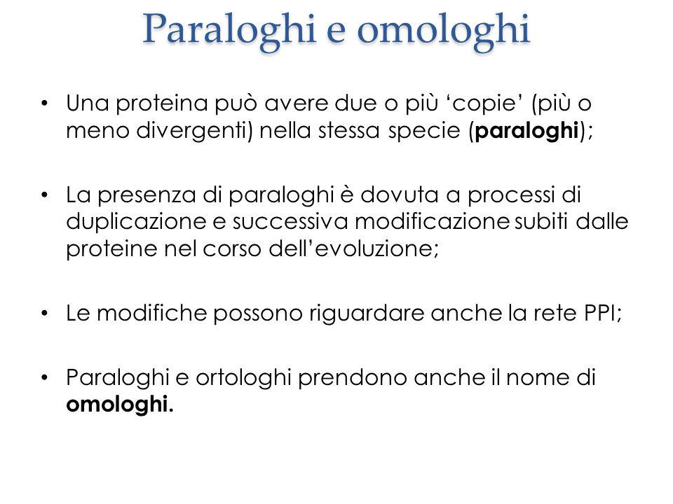 Paraloghi e omologhi Una proteina può avere due o più 'copie' (più o meno divergenti) nella stessa specie (paraloghi);