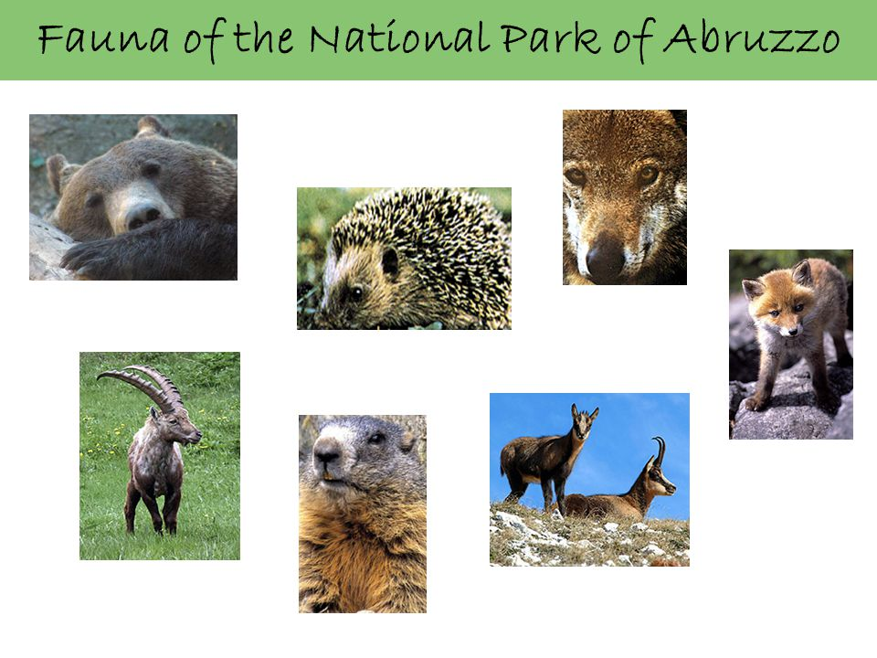 Fauna of the National Park of Abruzzo