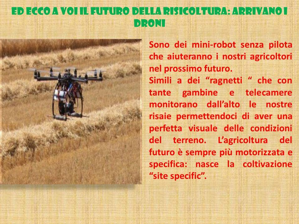 ED ECCO A VOI IL FUTURO DELLA RISICOLTURA: ARRIVANO I DRONI