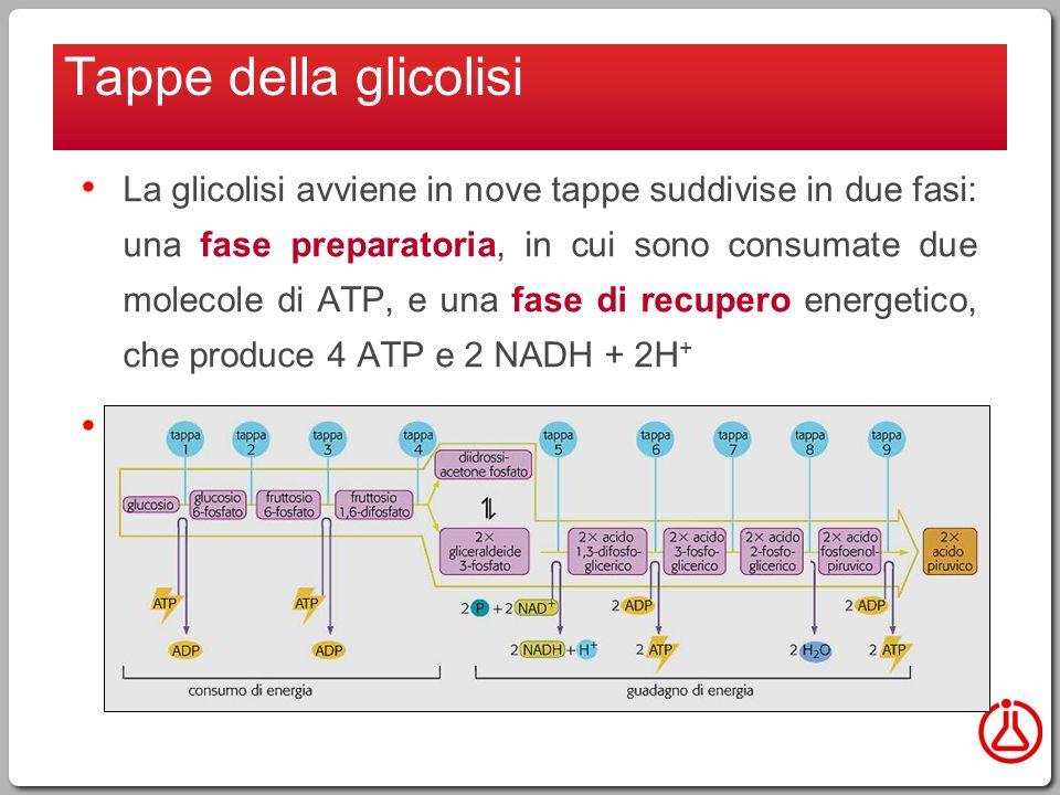 Tappe della glicolisi