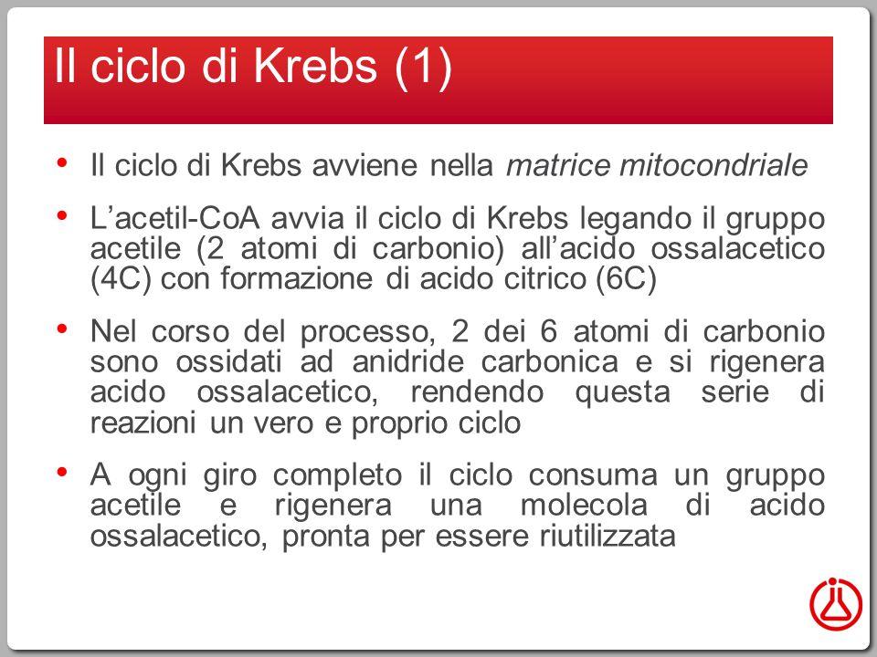 Il ciclo di Krebs (1) Il ciclo di Krebs avviene nella matrice mitocondriale.