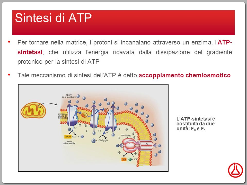 Sintesi di ATP
