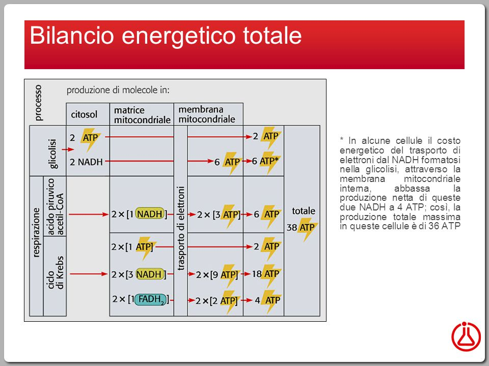 Bilancio energetico totale