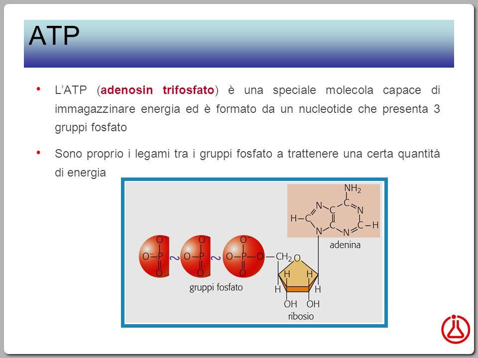 ATP L'ATP (adenosin trifosfato) è una speciale molecola capace di immagazzinare energia ed è formato da un nucleotide che presenta 3 gruppi fosfato.