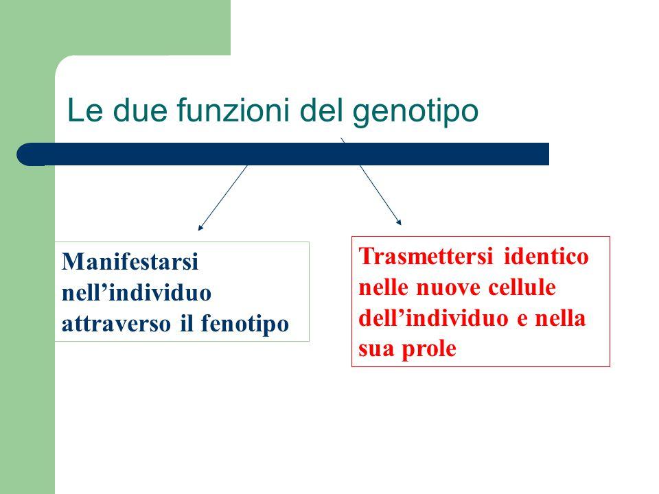 Le due funzioni del genotipo