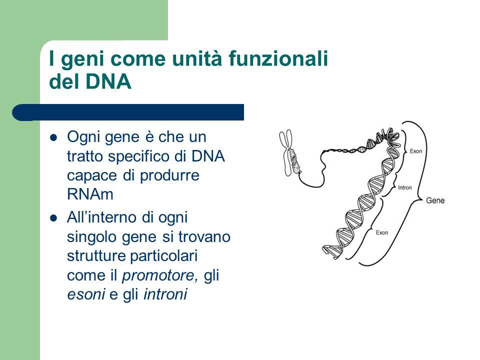 I geni come unità funzionali del DNA