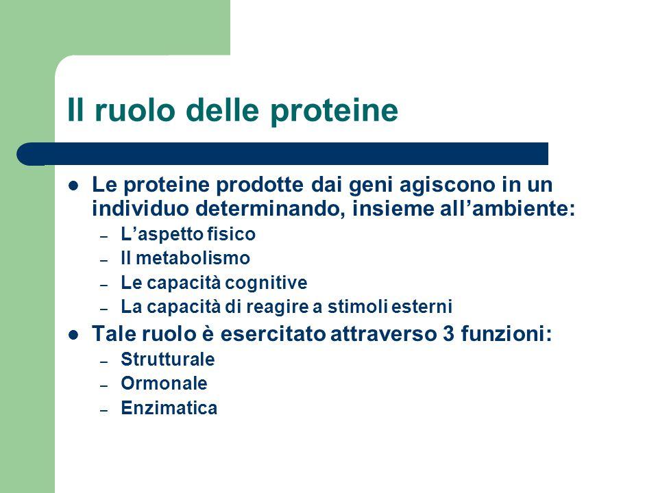 Il ruolo delle proteine