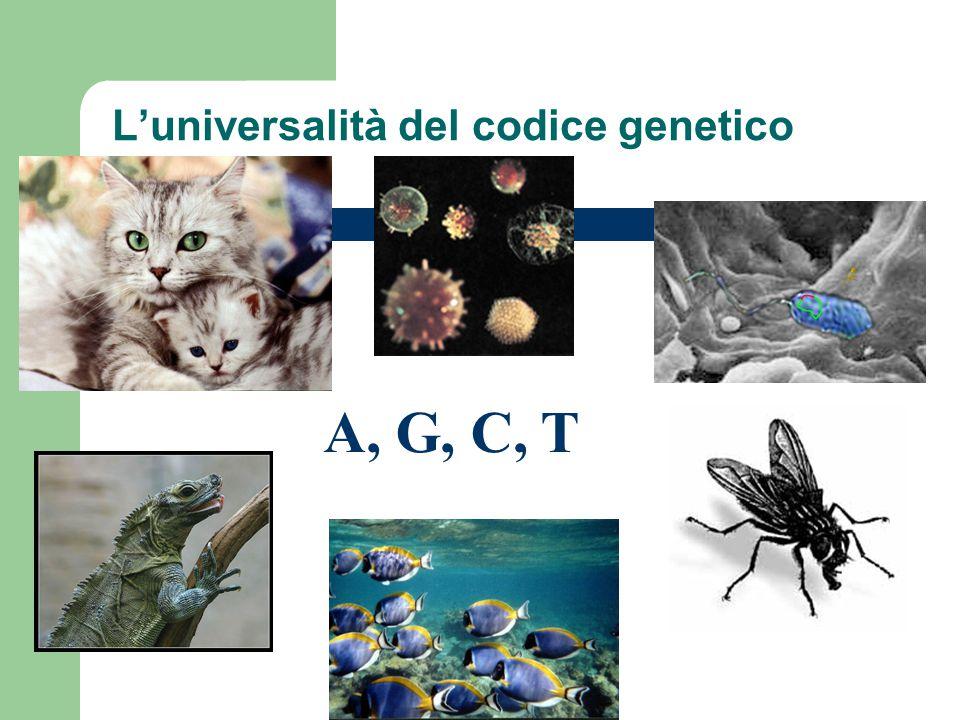L'universalità del codice genetico