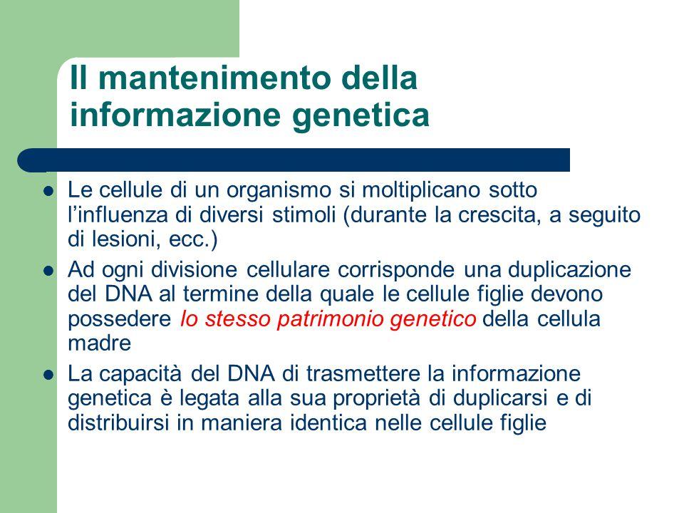 Il mantenimento della informazione genetica