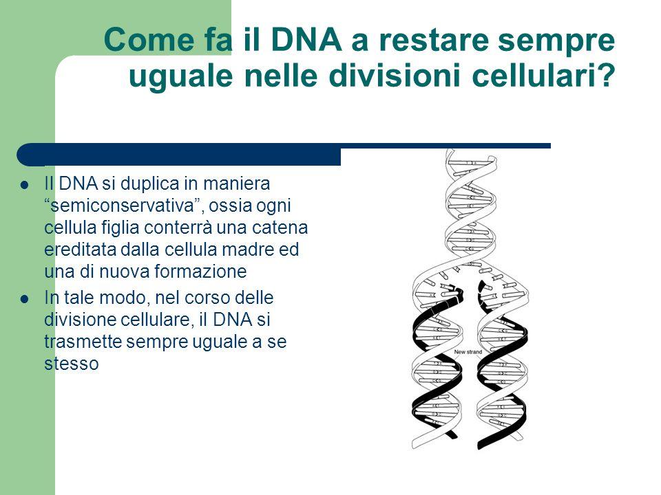 Come fa il DNA a restare sempre uguale nelle divisioni cellulari
