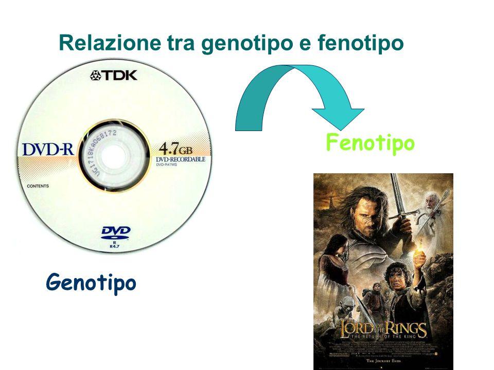 Relazione tra genotipo e fenotipo