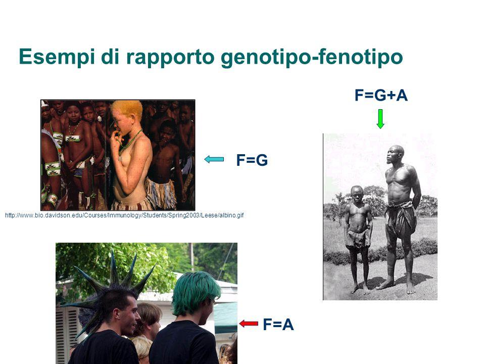 Esempi di rapporto genotipo-fenotipo