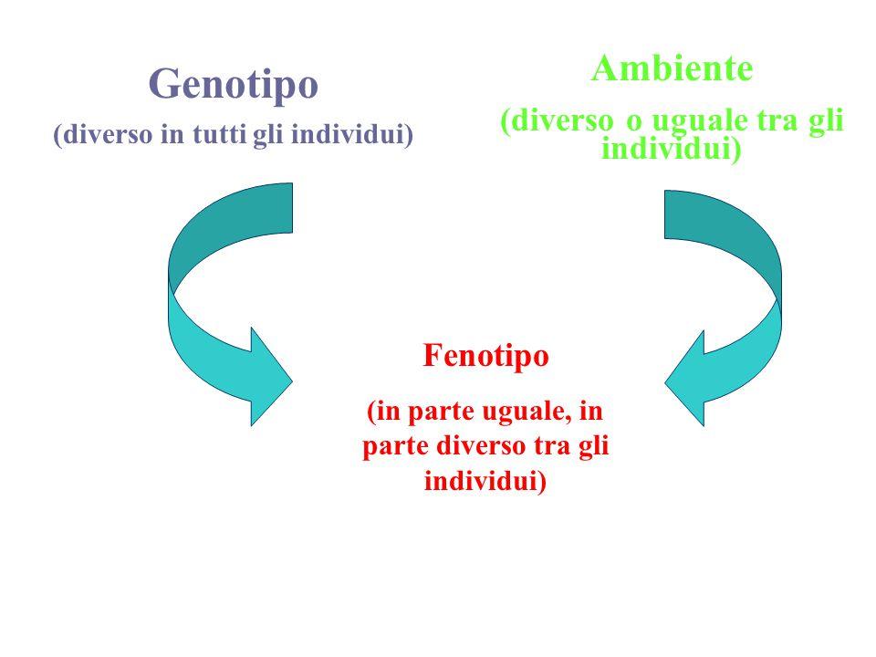 Genotipo Ambiente (diverso o uguale tra gli individui) Fenotipo