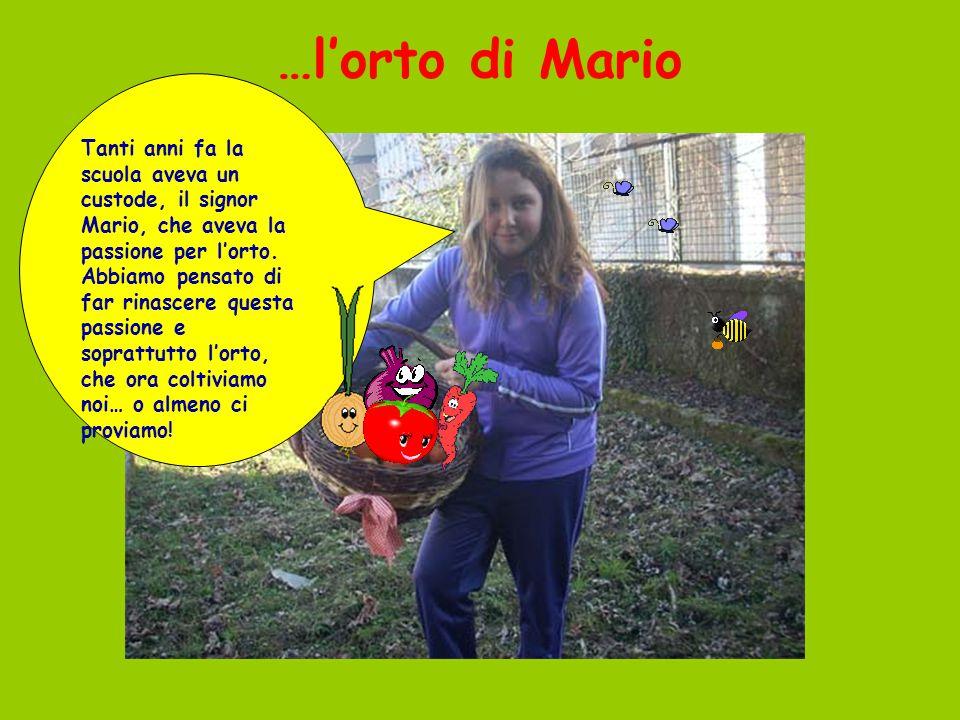 …l'orto di Mario