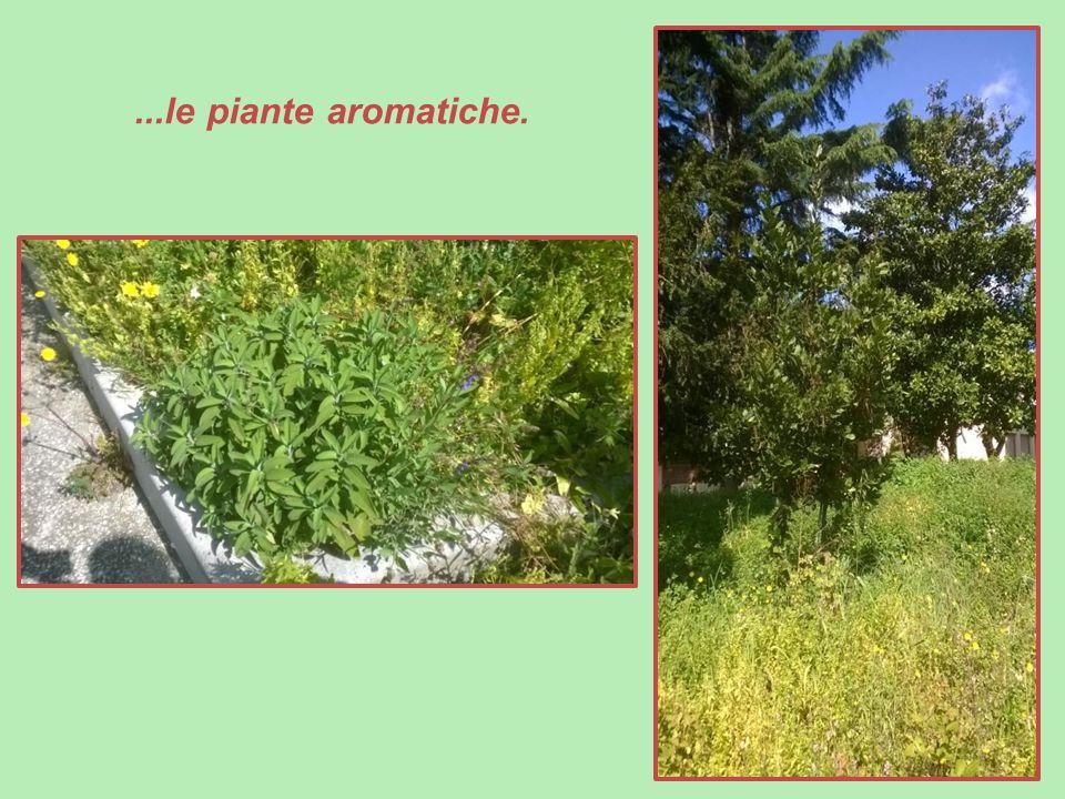 ...le piante aromatiche.