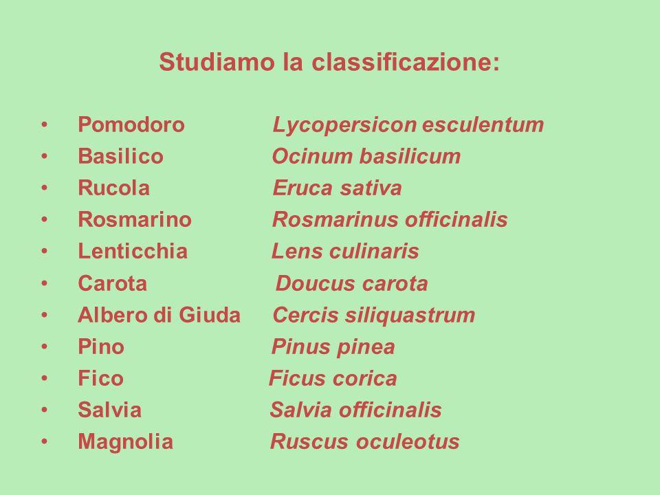 Studiamo la classificazione: