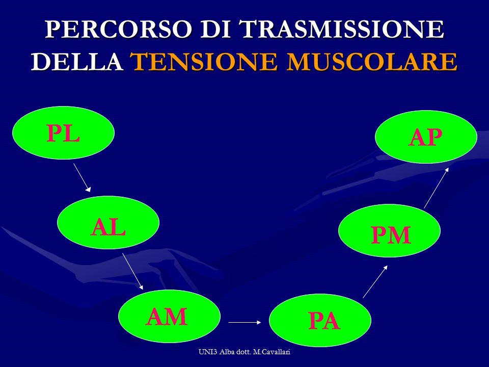 PERCORSO DI TRASMISSIONE DELLA TENSIONE MUSCOLARE