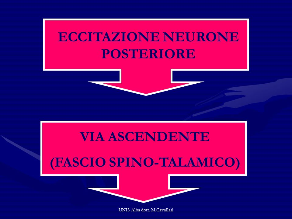 ECCITAZIONE NEURONE POSTERIORE (FASCIO SPINO-TALAMICO)