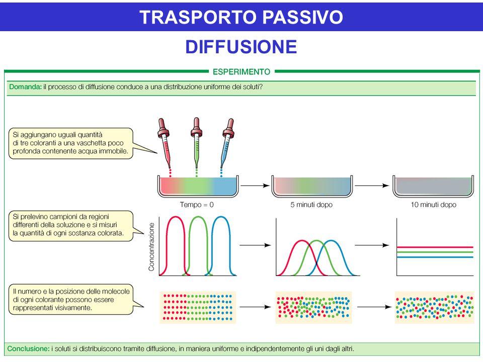 TRASPORTO PASSIVO DIFFUSIONE