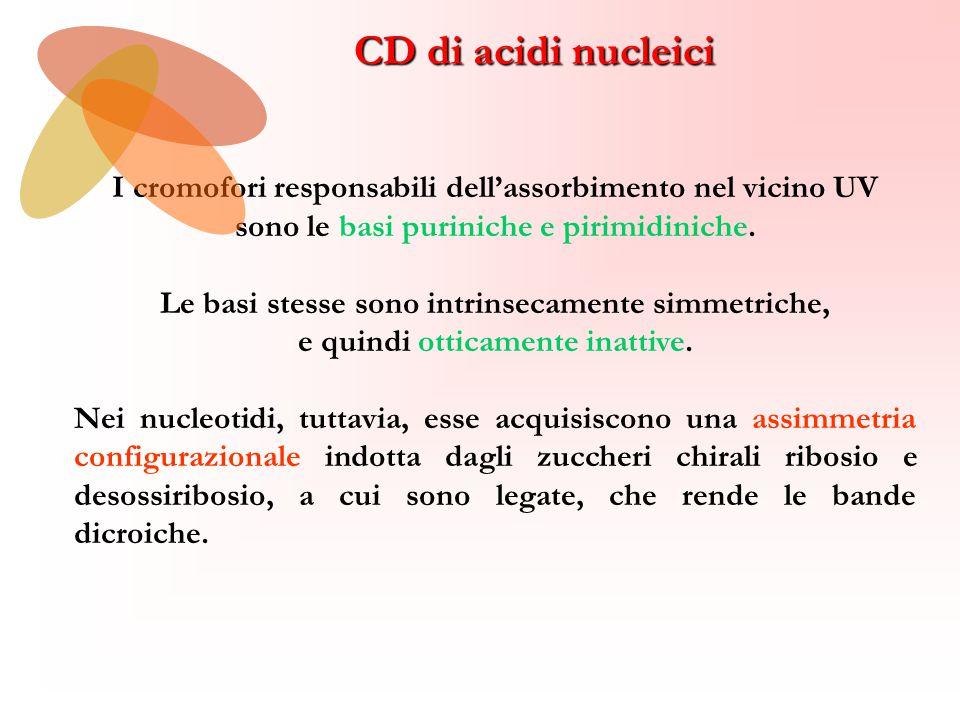 CD di acidi nucleici I cromofori responsabili dell'assorbimento nel vicino UV. sono le basi puriniche e pirimidiniche.