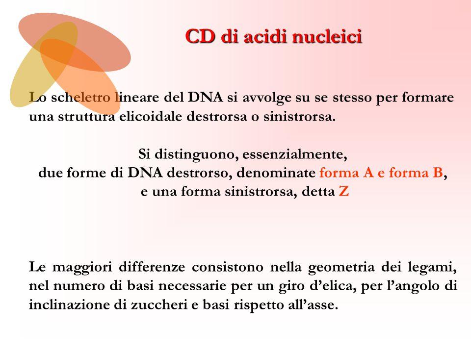 CD di acidi nucleici Lo scheletro lineare del DNA si avvolge su se stesso per formare una struttura elicoidale destrorsa o sinistrorsa.