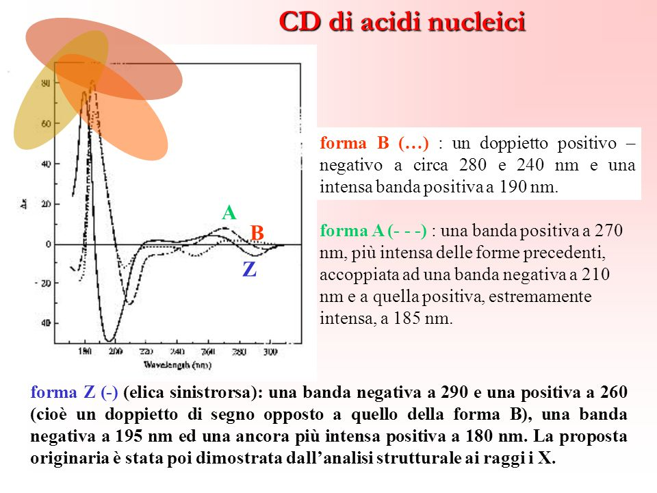 CD di acidi nucleici A B Z