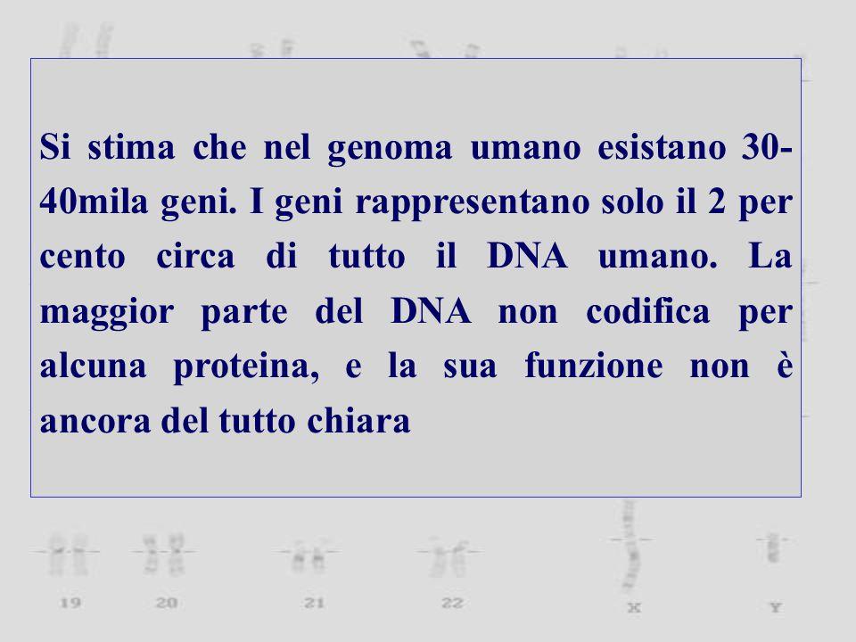 Si stima che nel genoma umano esistano 30-40mila geni