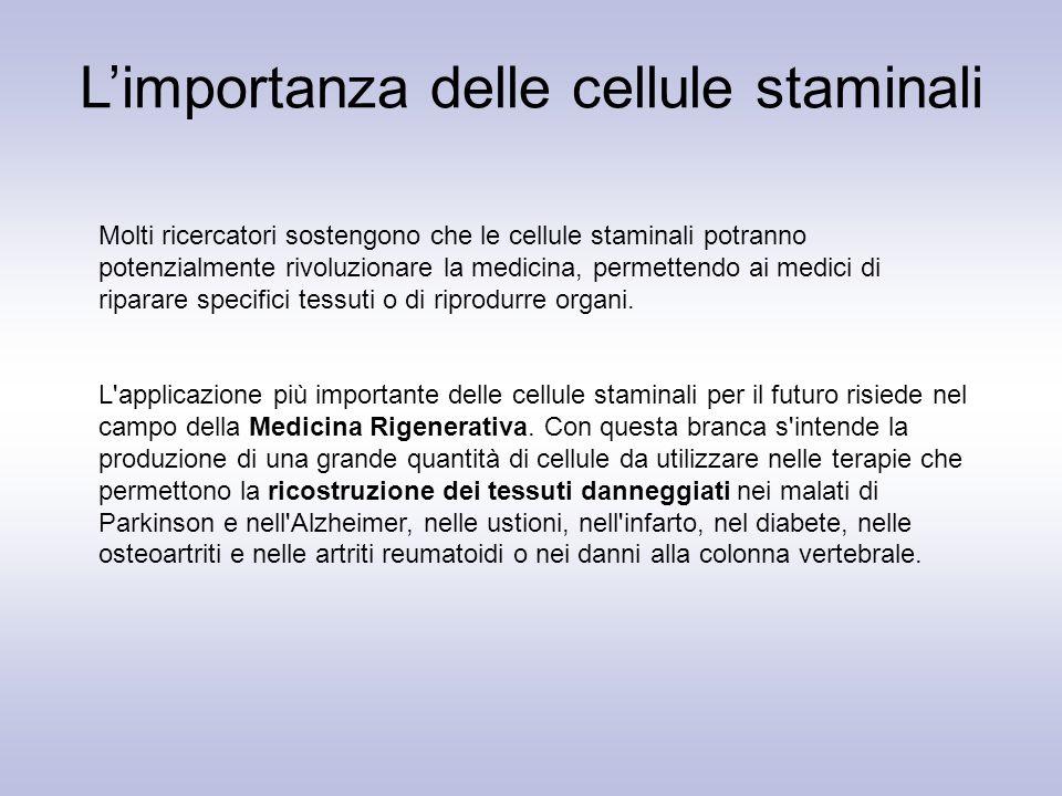 L'importanza delle cellule staminali