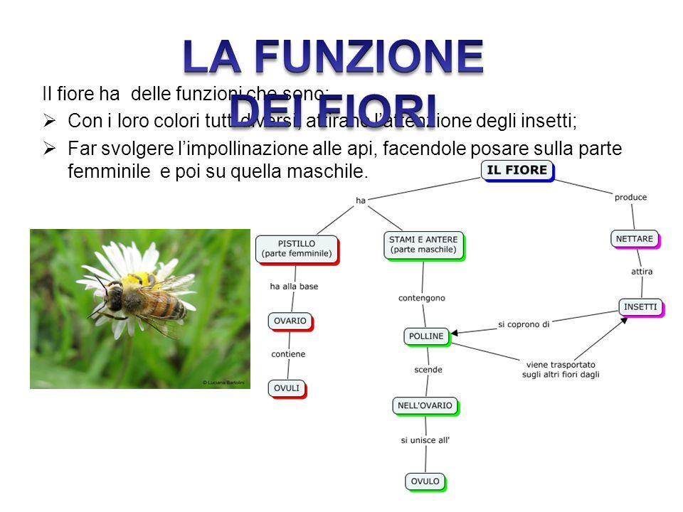 LA FUNZIONE DEI FIORI Il fiore ha delle funzioni che sono: