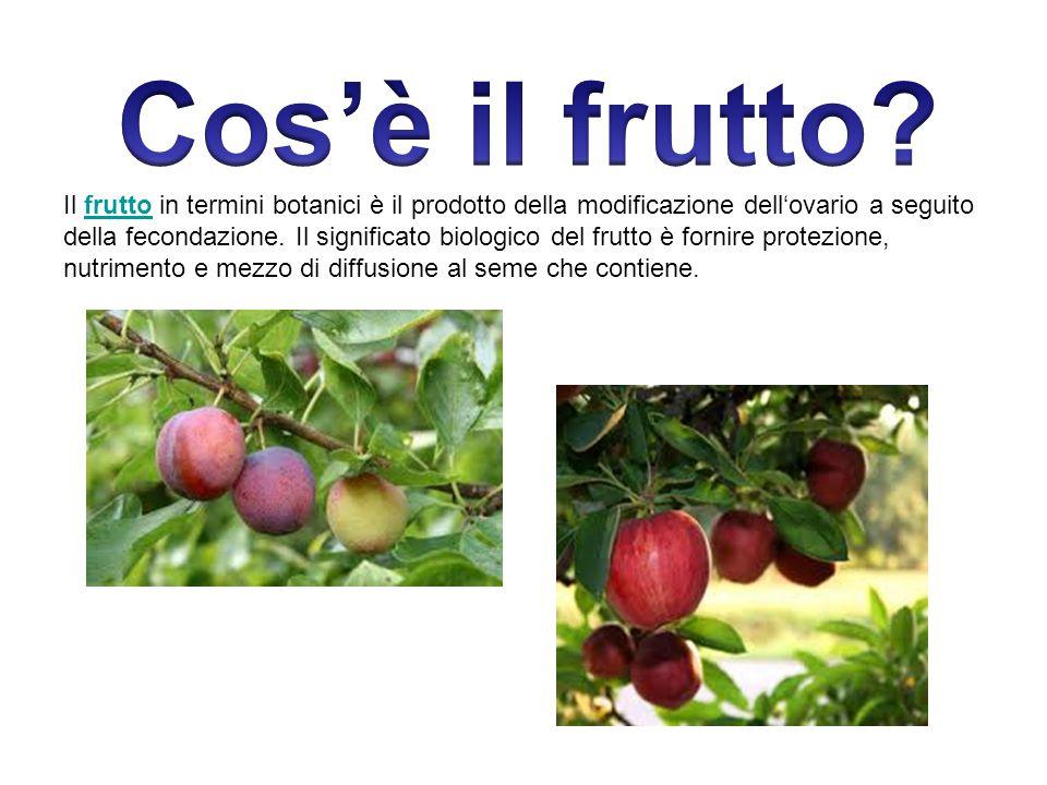 Cos'è il frutto