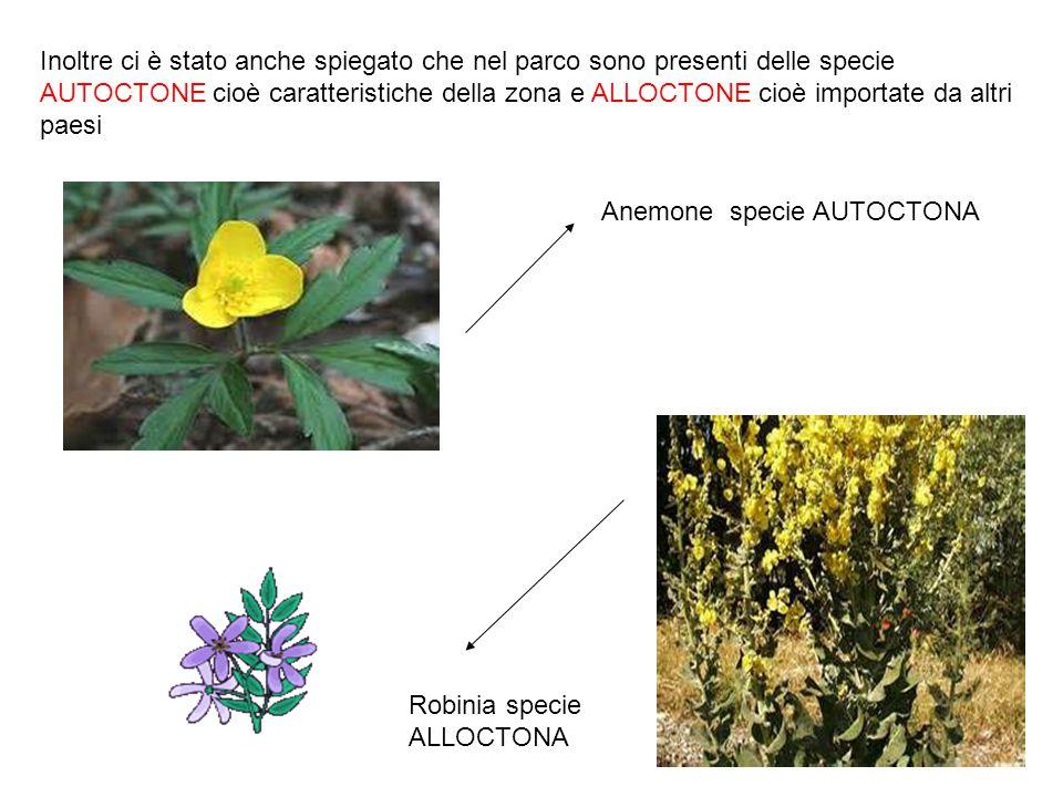 Inoltre ci è stato anche spiegato che nel parco sono presenti delle specie AUTOCTONE cioè caratteristiche della zona e ALLOCTONE cioè importate da altri paesi
