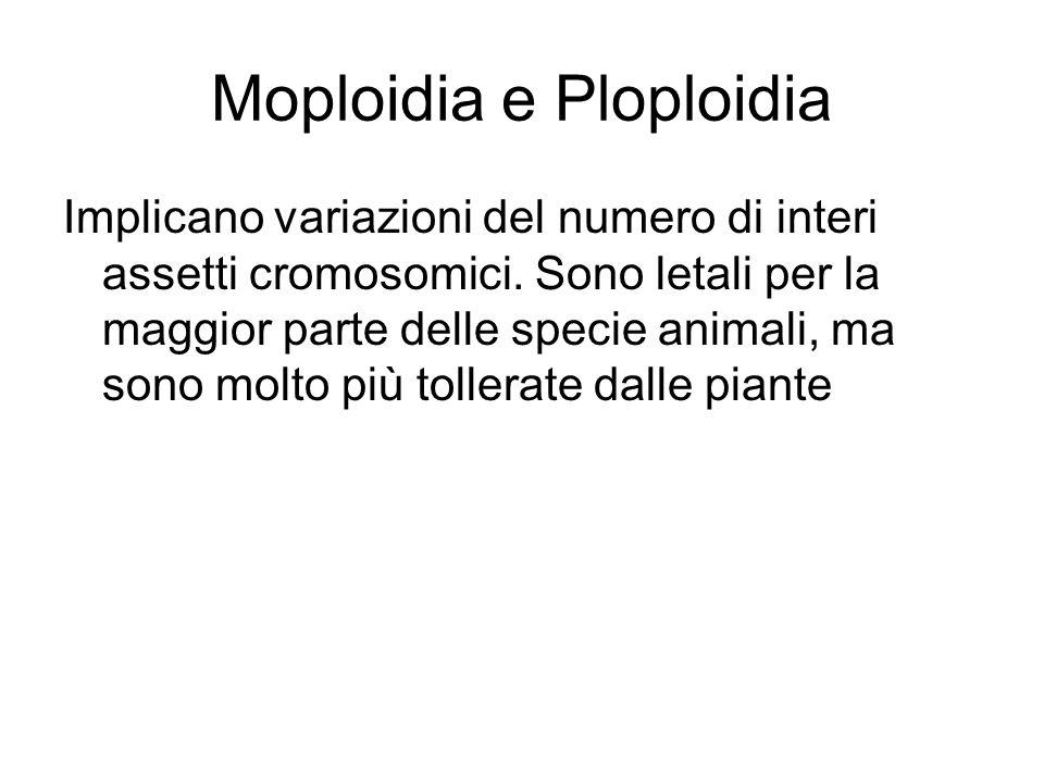 Moploidia e Ploploidia
