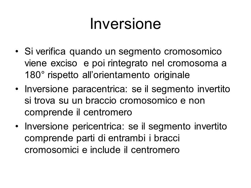 Inversione Si verifica quando un segmento cromosomico viene exciso e poi rintegrato nel cromosoma a 180° rispetto all'orientamento originale.