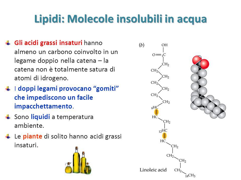 Lipidi: Molecole insolubili in acqua