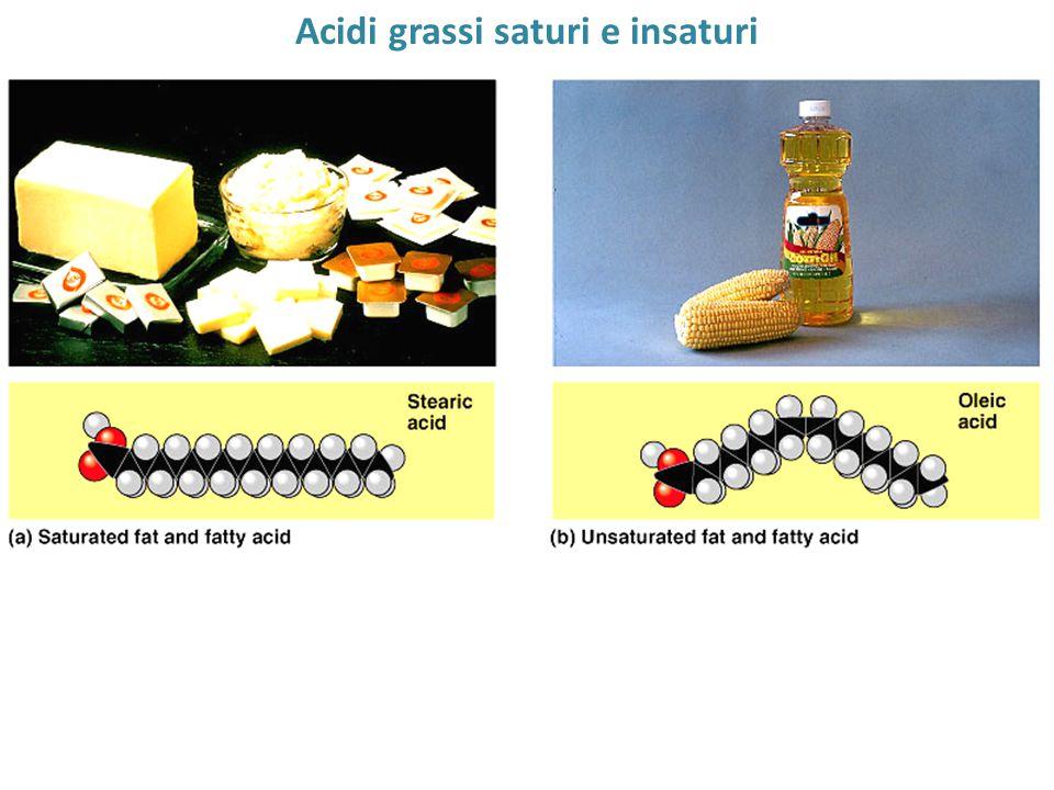 Acidi grassi saturi e insaturi