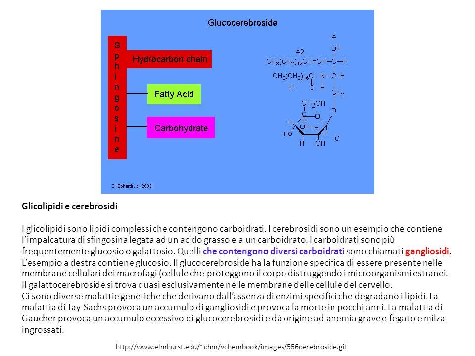 Glicolipidi e cerebrosidi