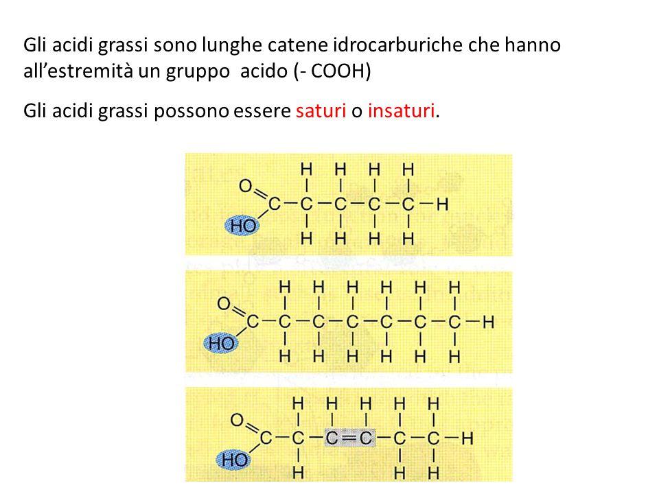 Gli acidi grassi possono essere saturi o insaturi.