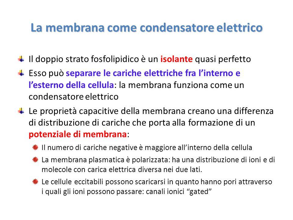 La membrana come condensatore elettrico